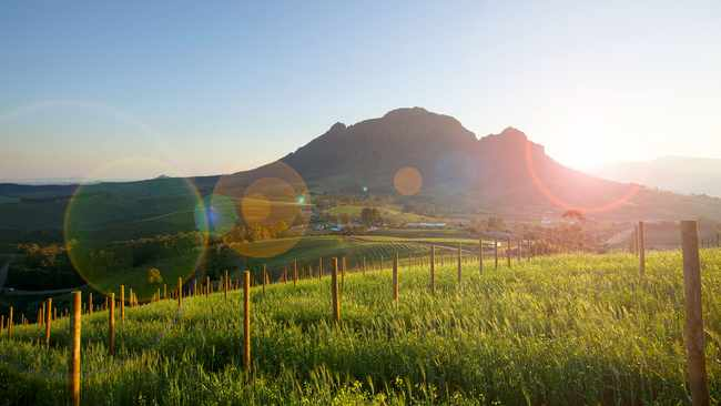 Watch: Sa Vineyard Among 50 Best Wine Tourism Destinations In The World photo