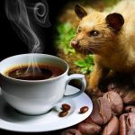 Kopi Luwak: All You Want to Know About the World's Most Luxurious Coffee photo