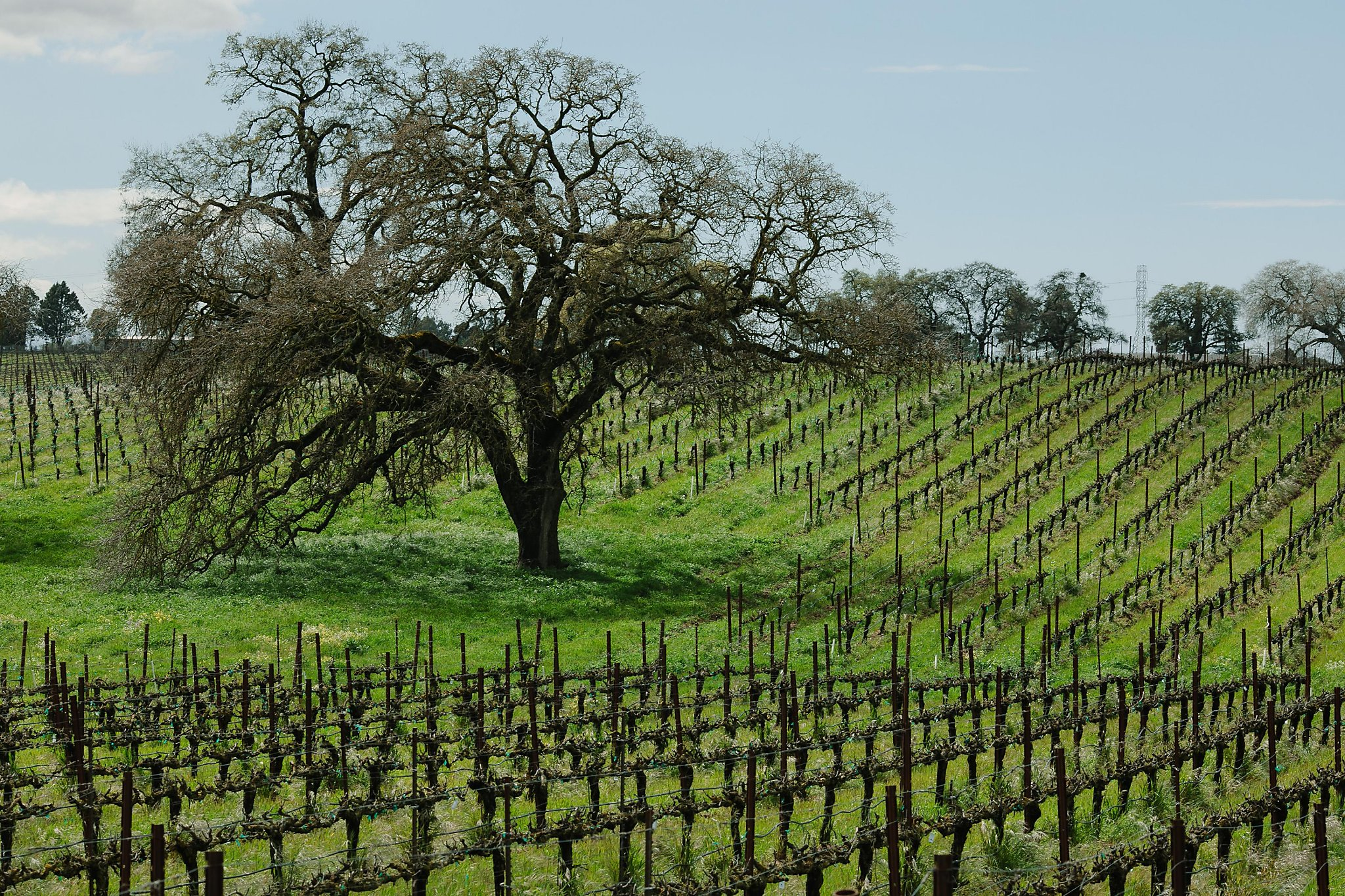 Lodi's Answer To Spanish-style Wines Is Bokisch Vineyards photo