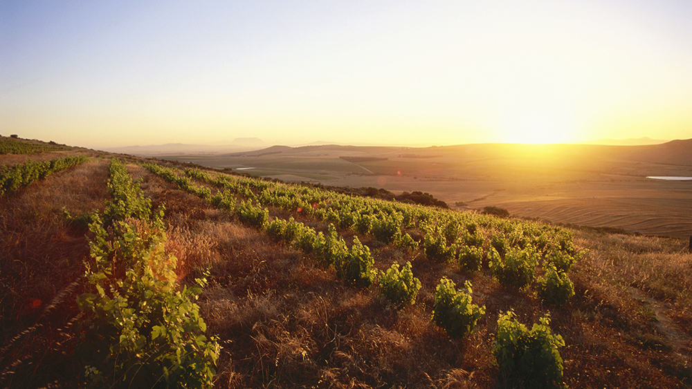 This South African Region Is Producing Award-winning Wines That Won't Break The Bank (yet) photo