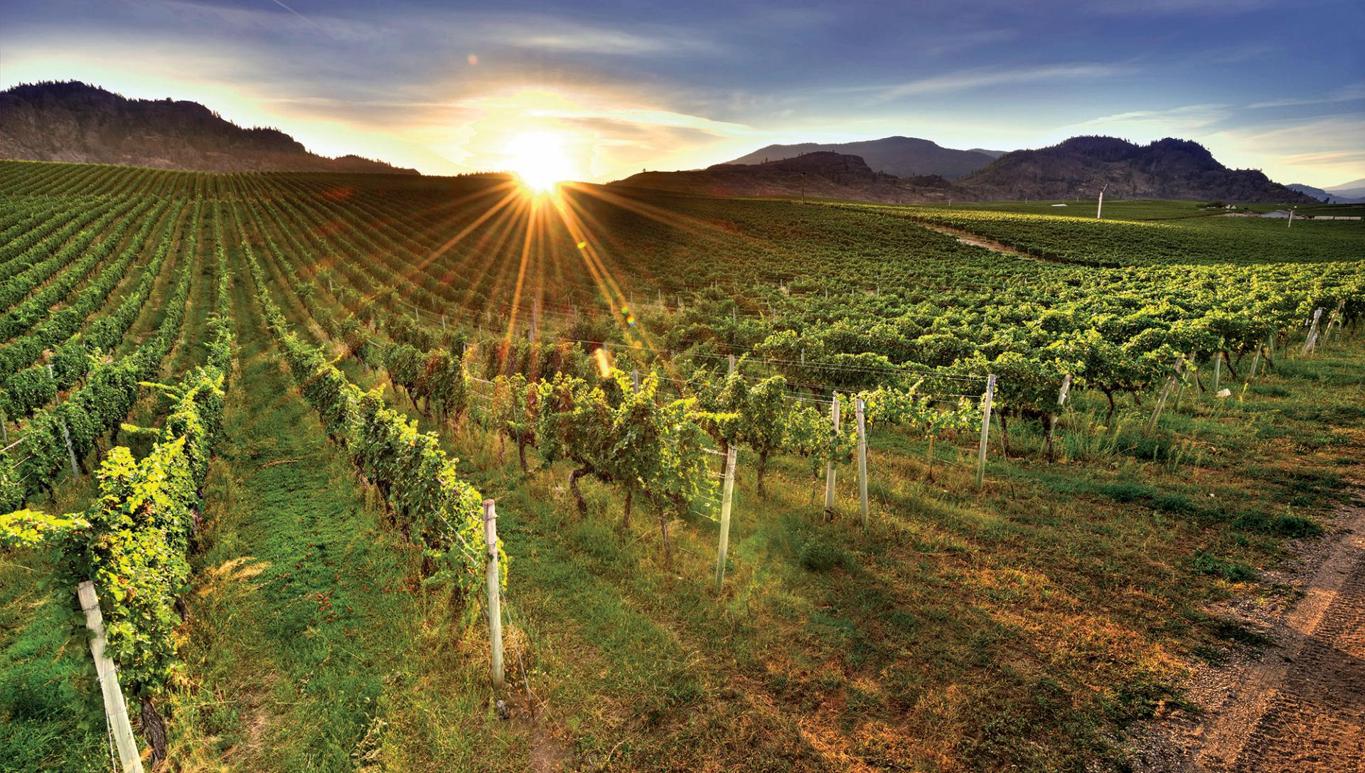 Glass Half Full: B.c.'s Wine Industry Is Filled With Challenges, And Possibilities photo