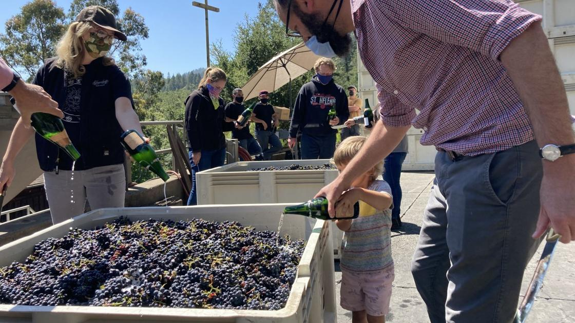 Grape Harvest Kicks Off In Napa Valley With Muted Celebrations photo
