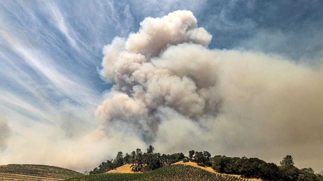 Napa Valley Harvest Report: Harvest Begins Amid Fire And Smoke photo