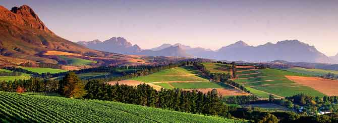 South African Wine's Political Nightmare photo