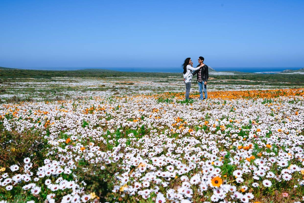 Flower Season In Cape Town: The Official Guide photo