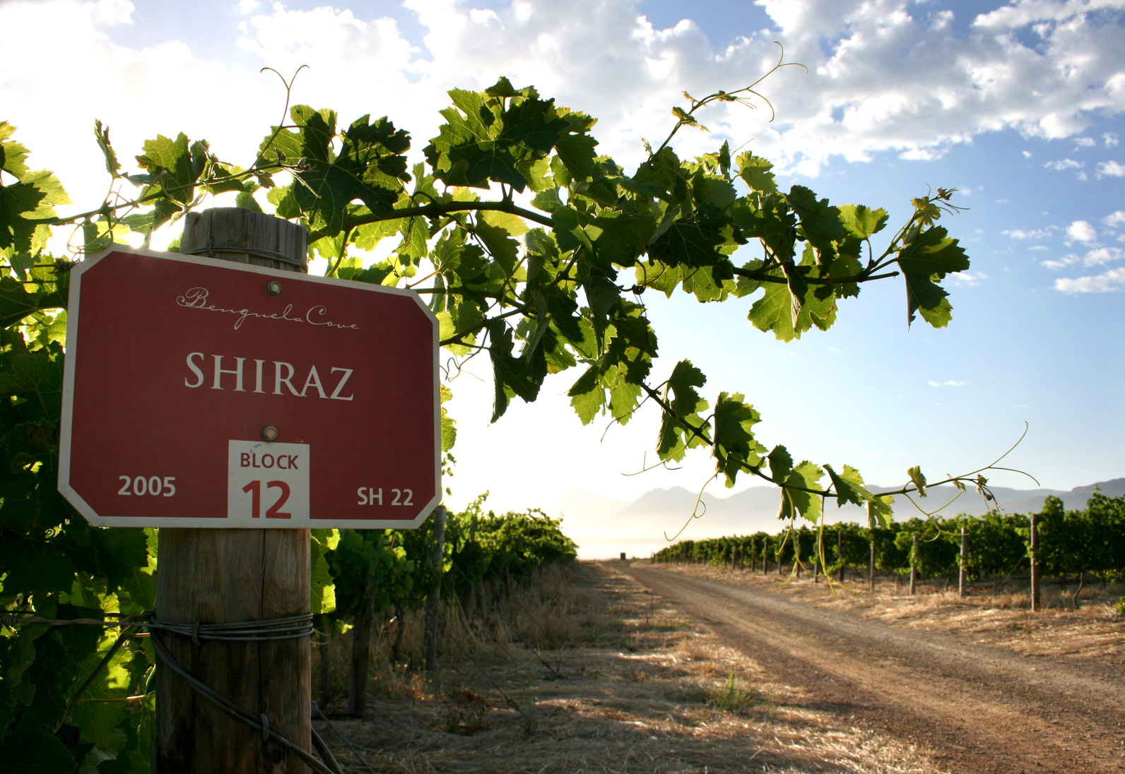 Two Benguela Cove Syrah Vintages hit the Shiraz SA Top 20 photo