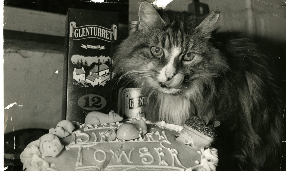 Cats And Scotch: The Whimsical Tales Of The Moggies Which Keep Scotland's Distilleries Mouse-free photo
