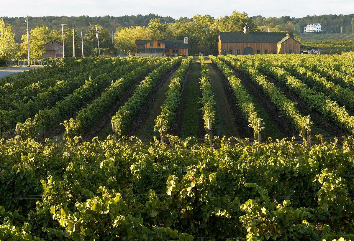 Travel News: Niagara's Wine Region Opens Up To Visitors photo