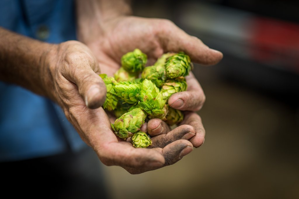 Will Climate Change Affect The Way Beer Tastes? photo