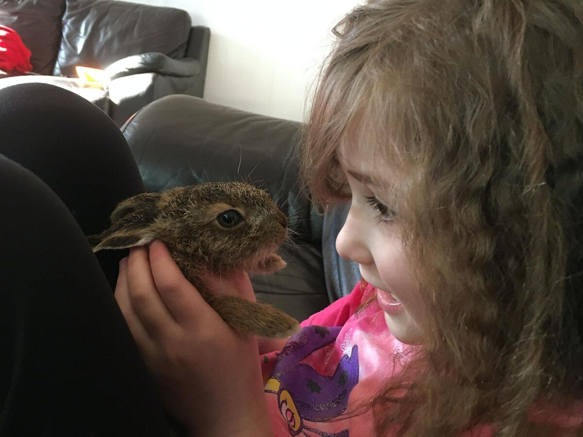 Orphaned Hare Returns To Visit Family Who Saved And Reared Her photo