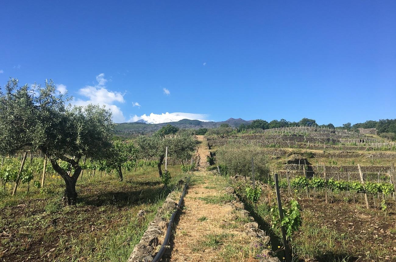 Dwwa 2020: Southern Italy Wine Regions To Watch photo