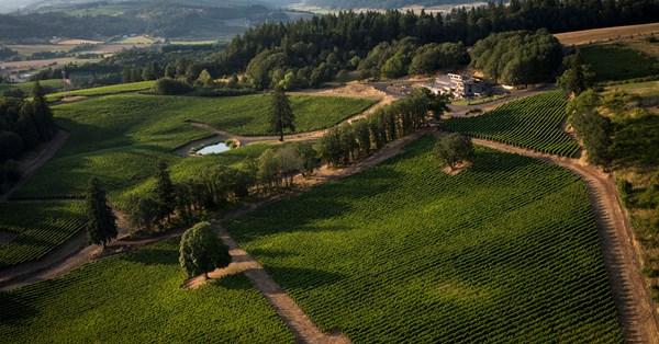 Oregon's Alexana Winery Enters The Uk Market photo