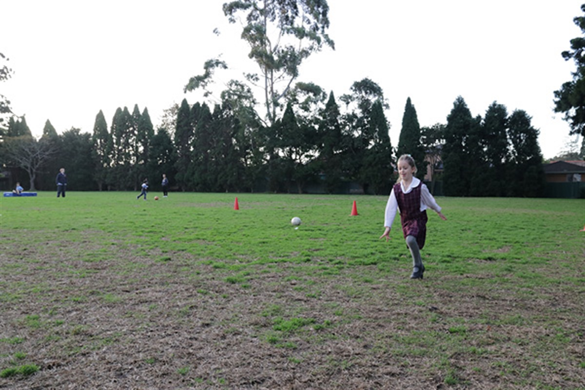 Oval Upgrades At Willoughby Park And Bales Park photo