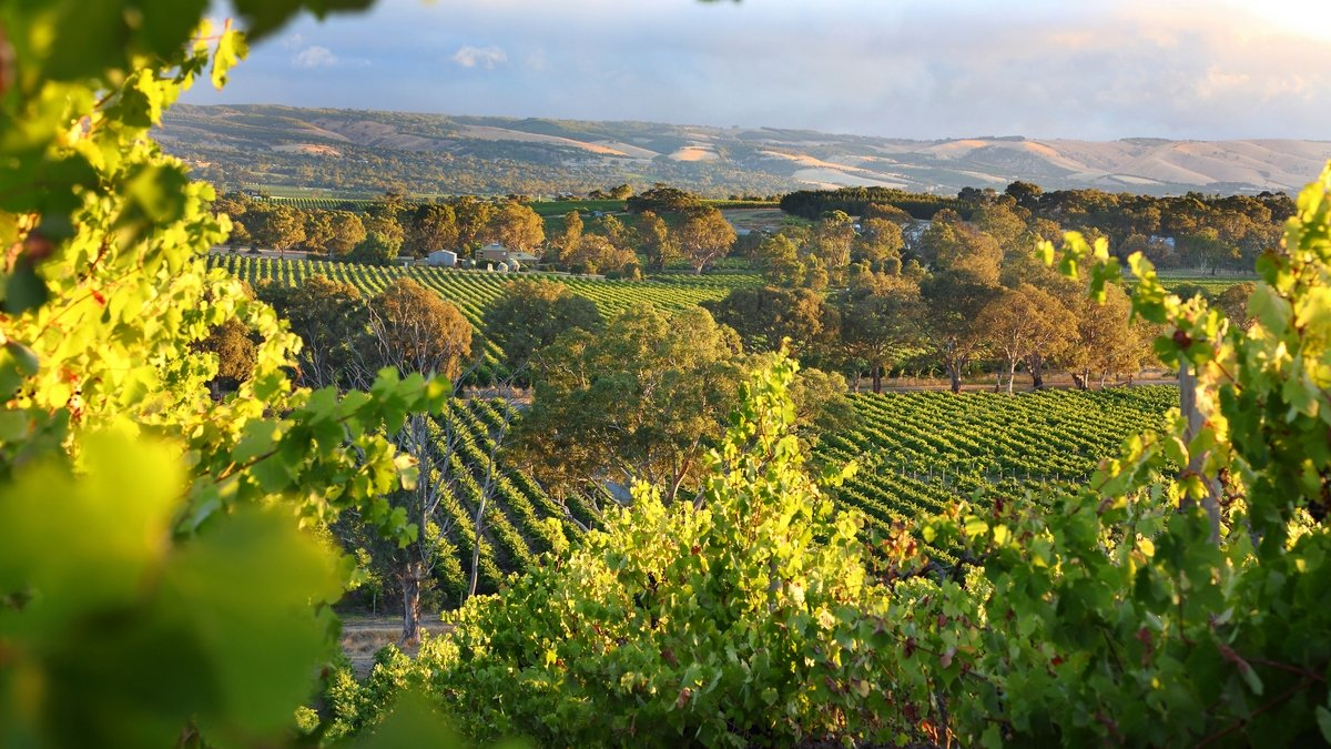 The Best Aussie Wine Regions To Visit If You Could Use A Drink After 2020 photo