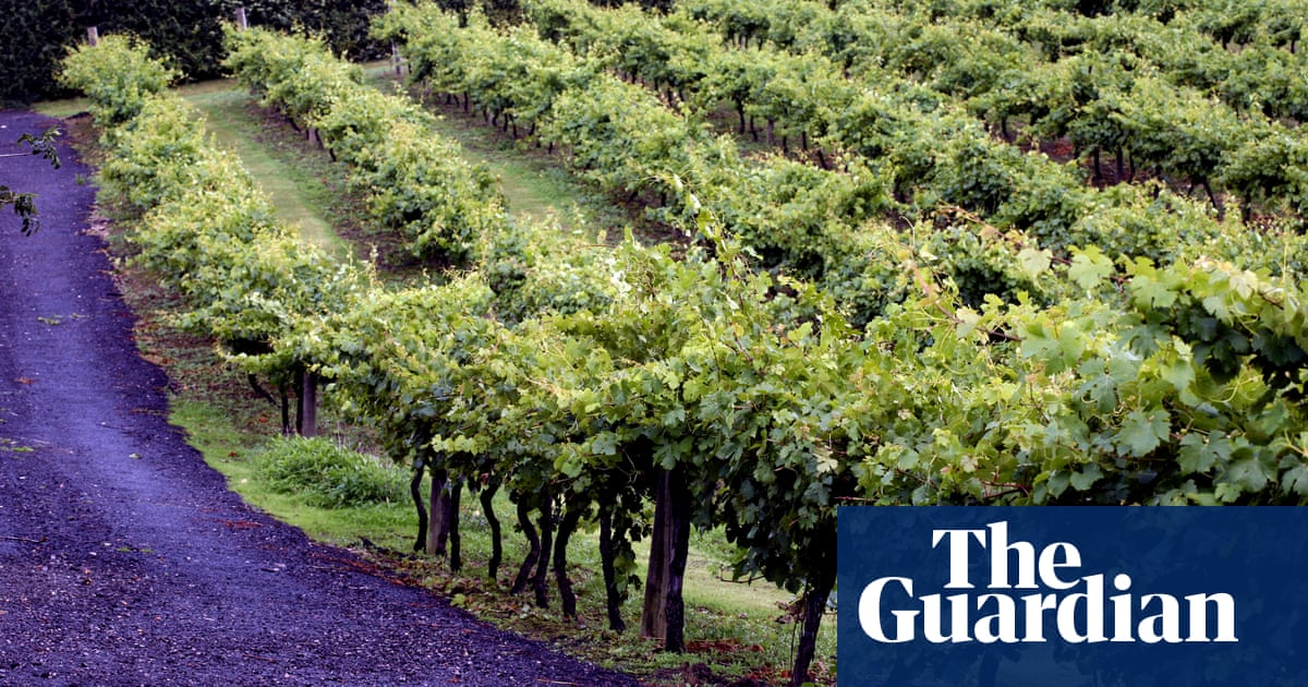 English Wines Get Seal Of Approval – Archive, 8 September 1979 photo