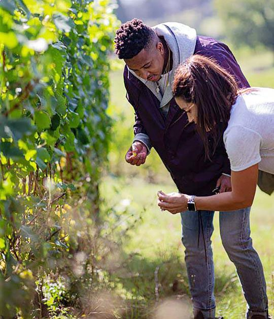Trail Blazers' Mccollum Starts New Oregon Wine Label photo