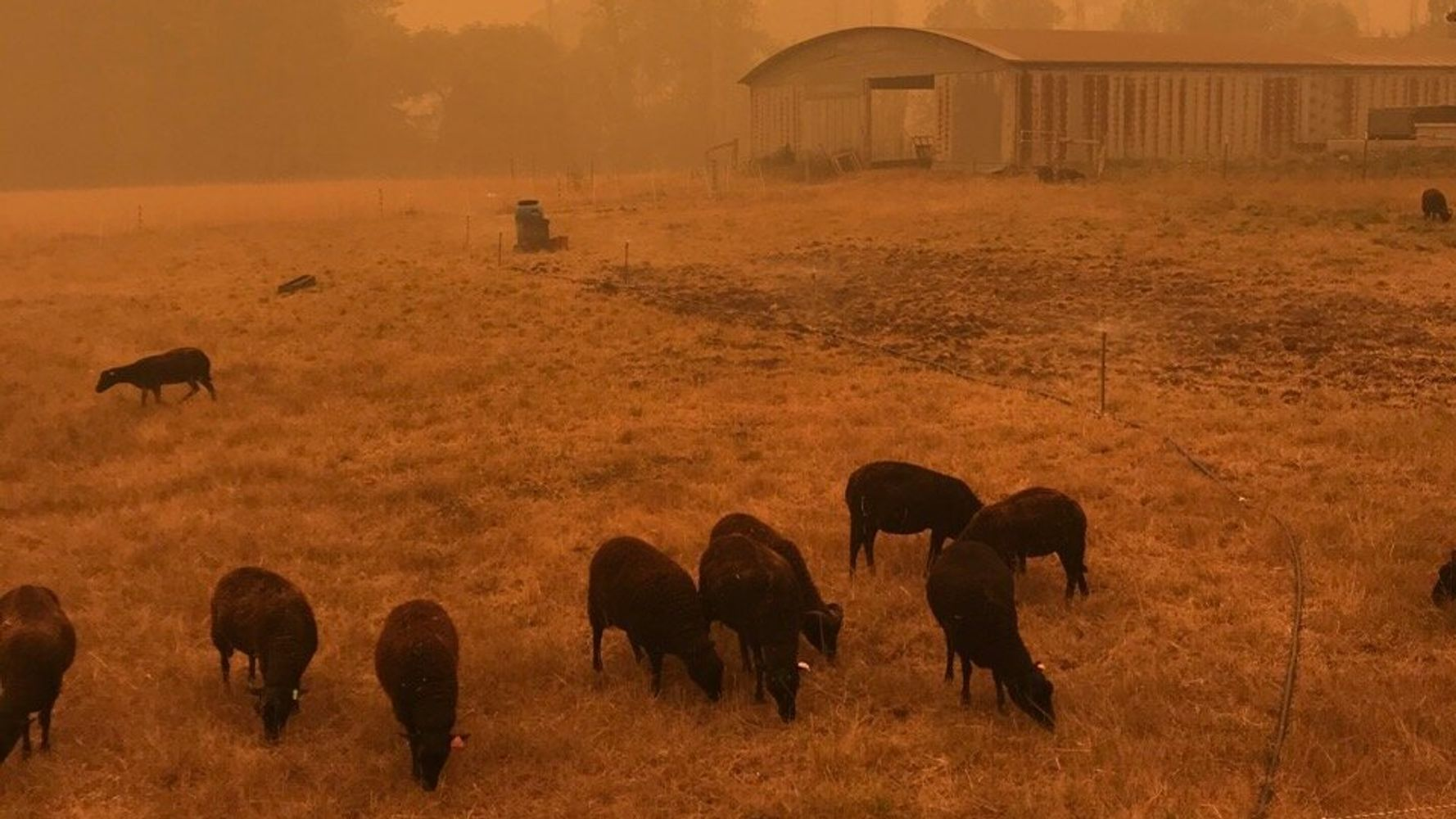 How You Can Help Farmers Suffering From Wildfires Right Now photo