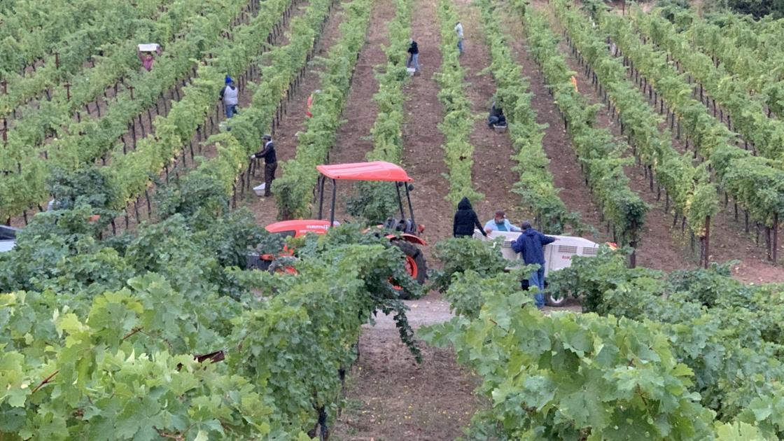 Napa Valley Harvest Report: Harvest Enters Its Final Weeks photo