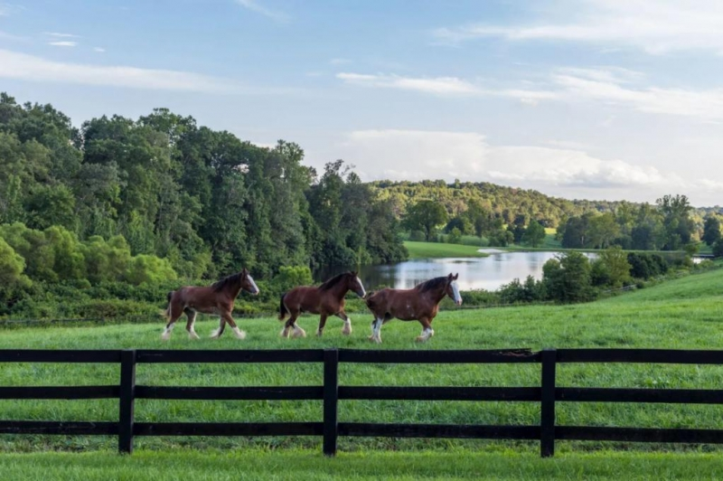 $75 Million Estate In Virginia Comes With Budweiser Clydesdales photo