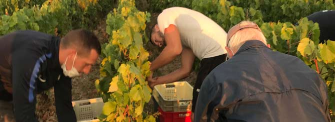 Harvest Finally Brings Good News For Champagne photo