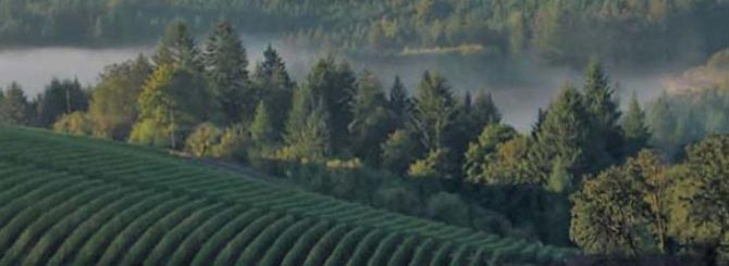 Oregon Wine Industry Continues To Grow photo