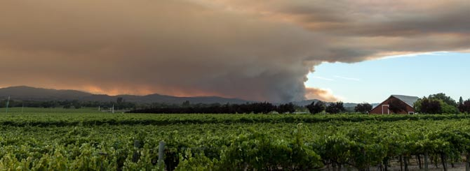 Winemakers Face Up To Smoke Taint Reality photo
