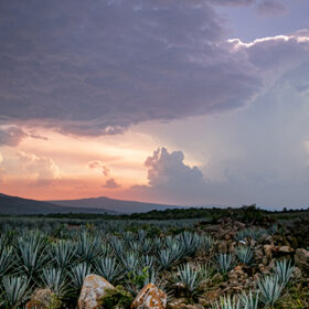 Amber Beverage Group Buys Agave Fields photo