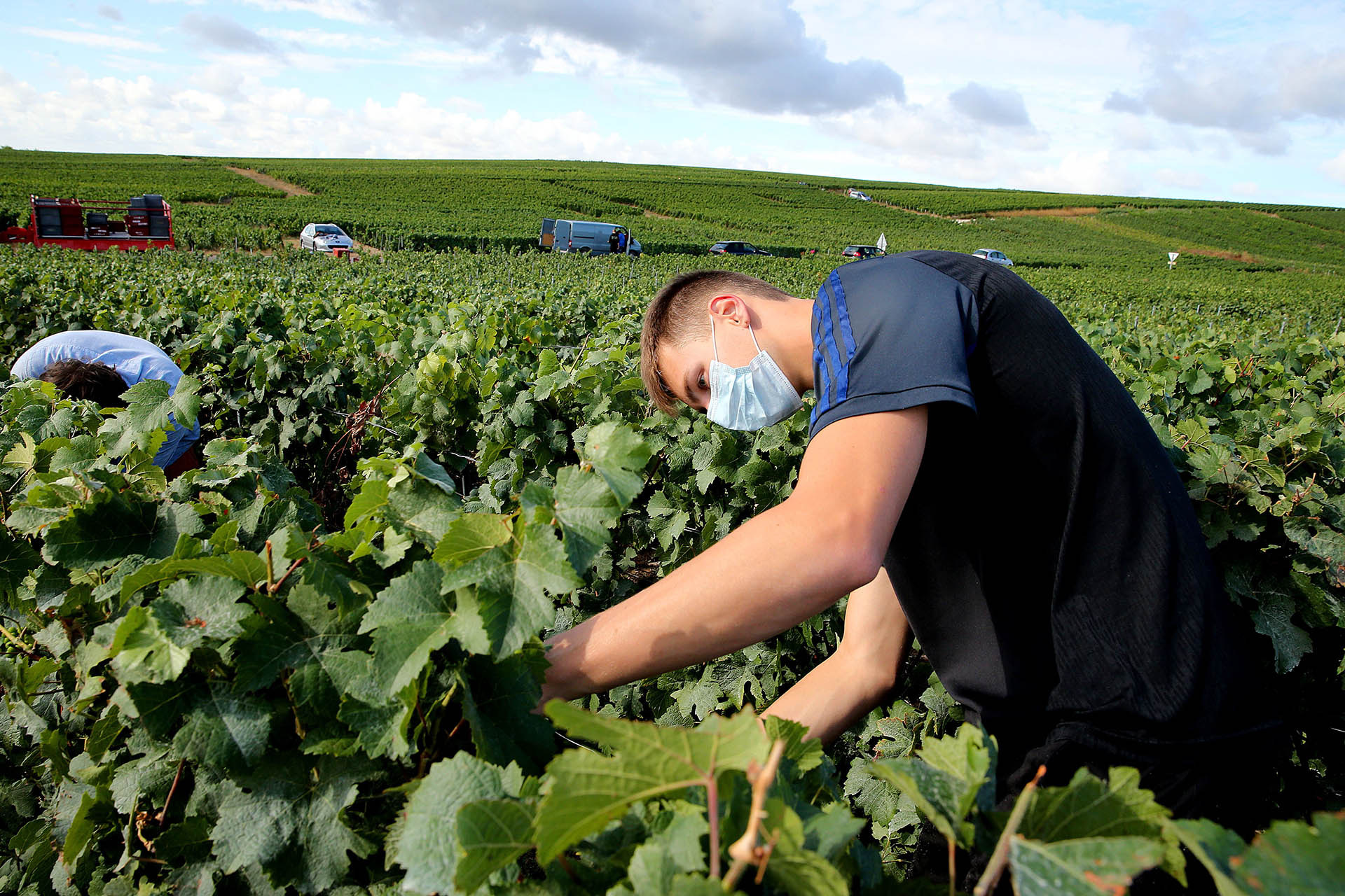 The Pandemic Is One Of Many Forces Upending The 2020 Champagne Harvest photo