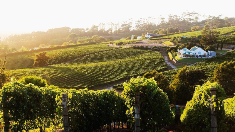Top Spots To Discover In The Constantia Wine Valley This Summer photo
