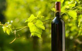 Organic Wine Market Expected To Witness High Growth Over The Forecast Period 2020 – 2026 By Emiliana Organic Vineyards, The Organic Wine Company, King Estate Winery, Concha Y Toro, King Estate Winery photo
