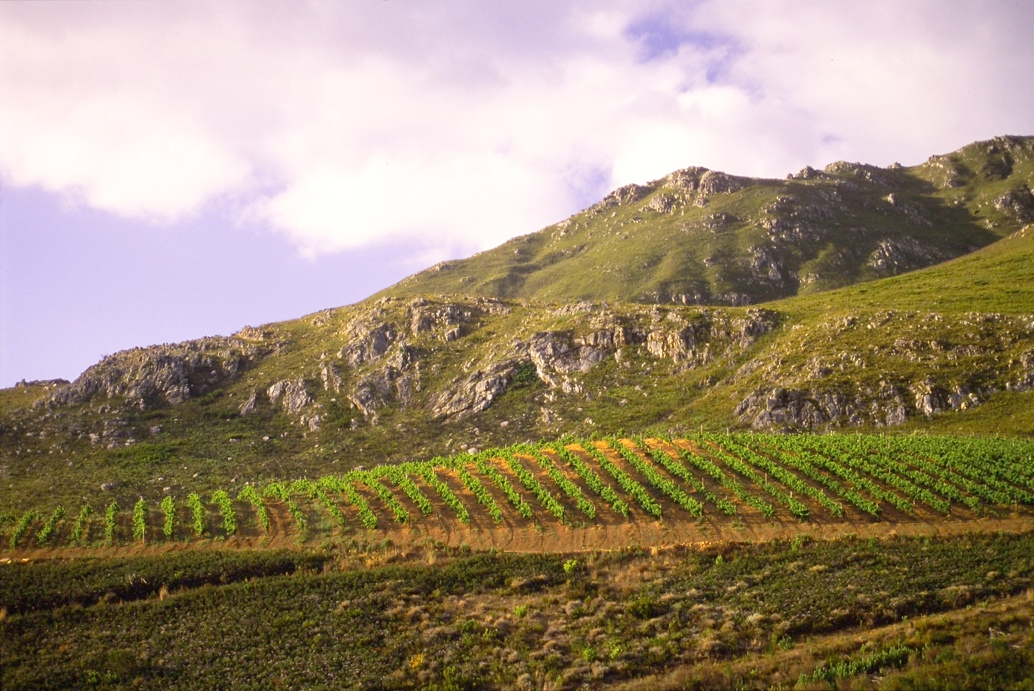 WWF Partnership with South African Wine Set to Make Inroads in International Markets photo