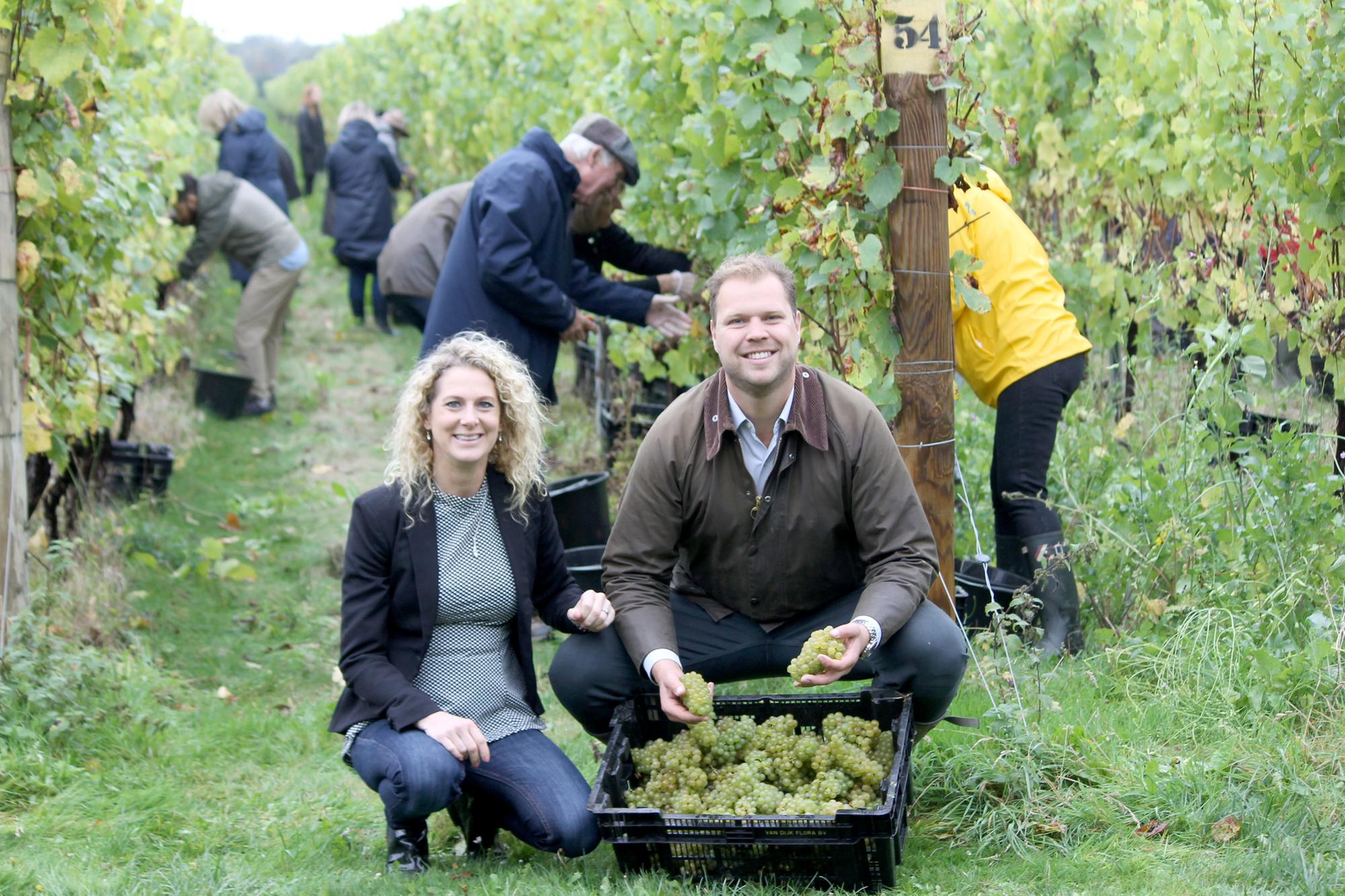Meet The Family Behind Chichester's Popular Vineyard Tinwood Estate photo