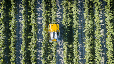 5 Key Steps In The 2020 Grape Harvest For Hennessy Cognac photo