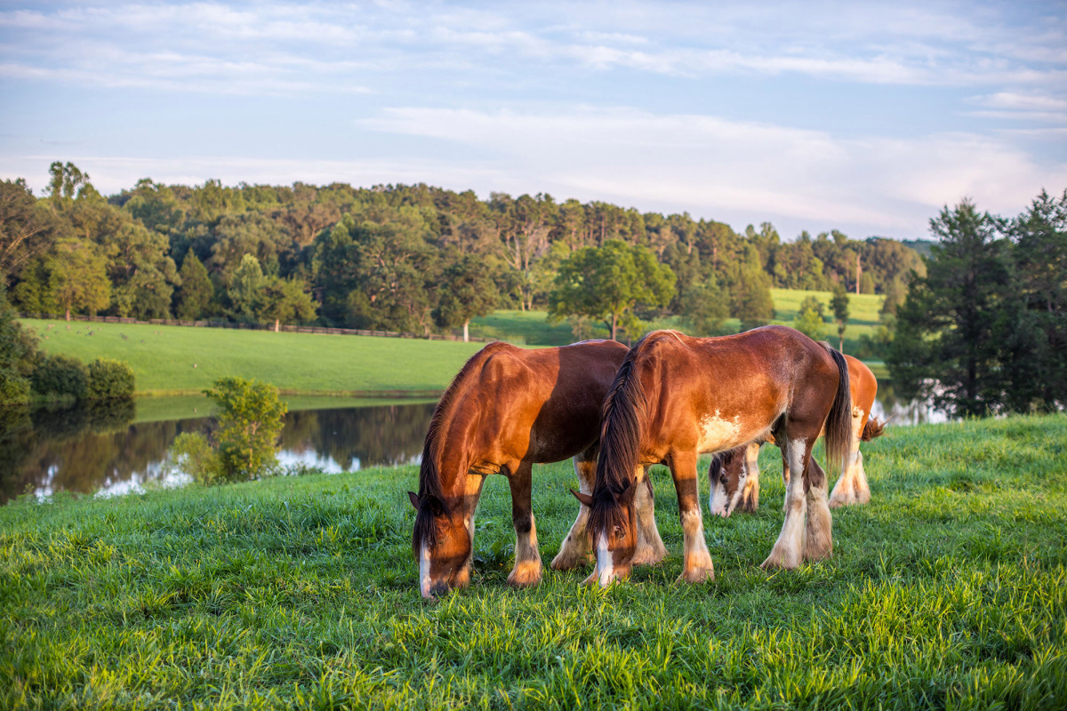 $75m Estate Comes With Iconic Budweiser Clydesdales photo