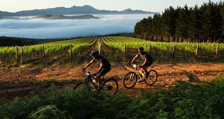 The Best Wine Farms For Mountain Biking In The Cape photo