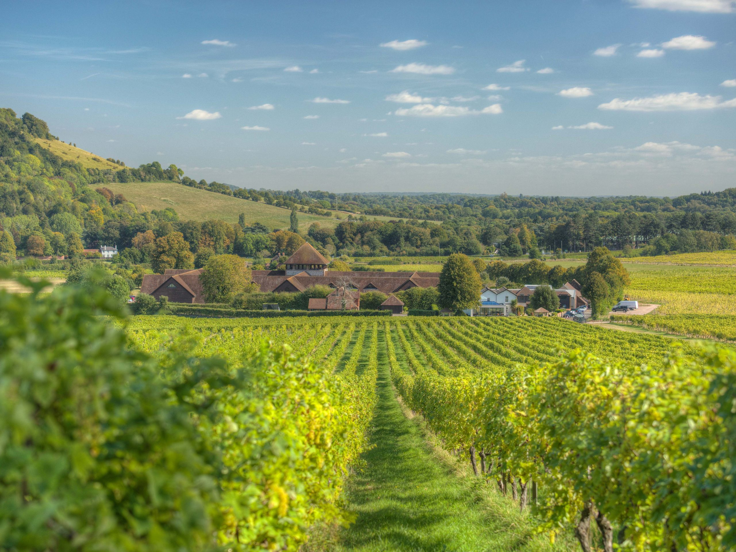 The Uk's Best Vineyard Experiences For A Wine-filled Weekend photo
