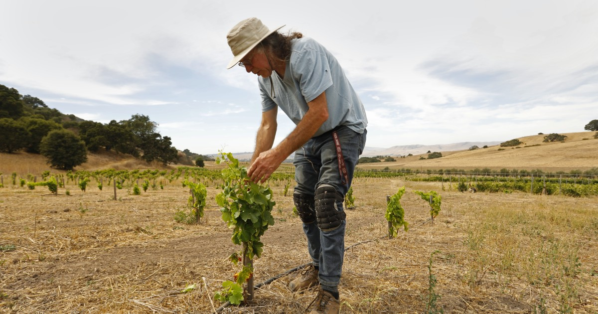 Fire, Smoke, Heat, Drought — How Climate Change Could Spoil Your Next Glass Of California Cabernet photo