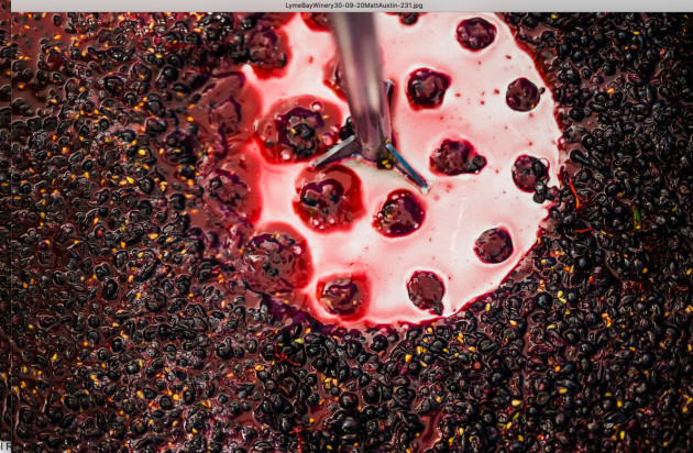 Lyme Bay Unveils Pinot Noir With 14.7% Abv Potential photo