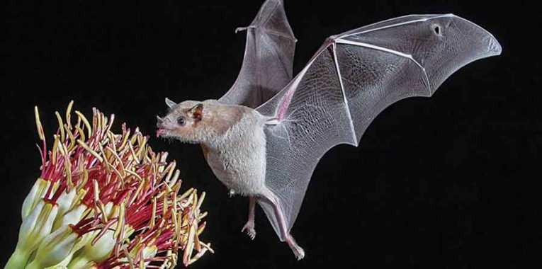 Why You Should Celebrate Bat Week With A Shot Of Tequila photo