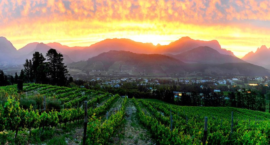Bucket List: Top 15 Best Things To Do In Franschhoek, South Africa photo