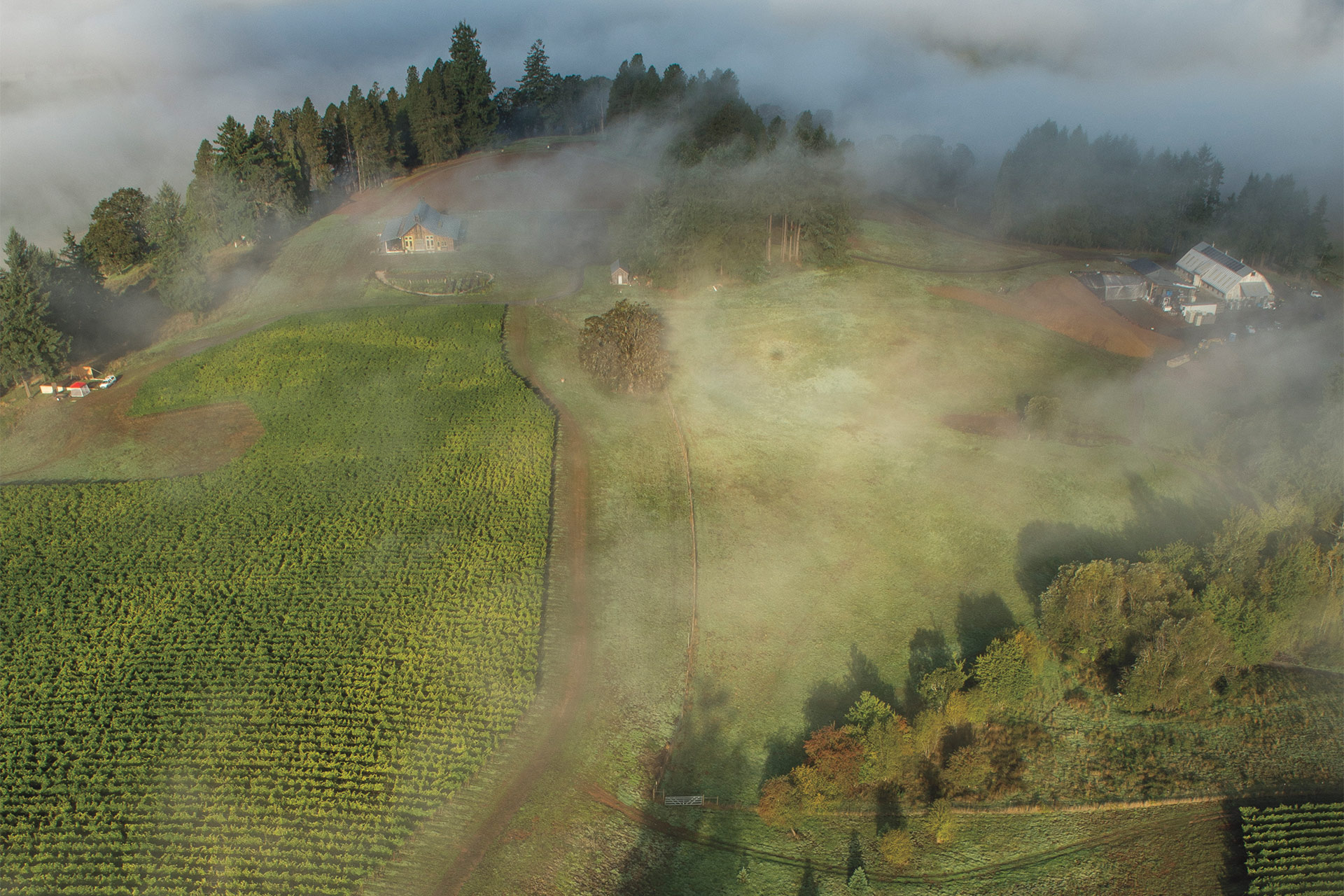 America's Burgundy? Oregon's Value Pinot Shows The Way photo