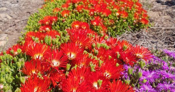 45 Cape Wine Farmers Find Ally In Indigenous Fynbos photo