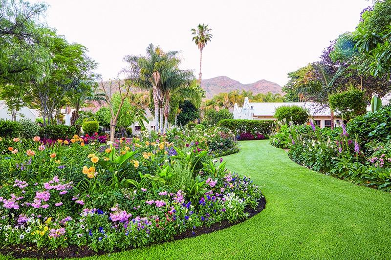 Van Loveren's Picture-perfect Heritage Garden photo