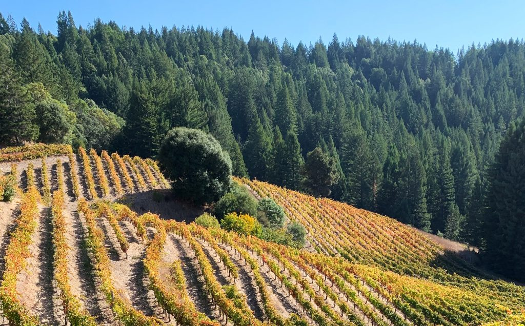 Keeping Mendocino Cool: Introducing Boonville Road Wines : Vinography photo