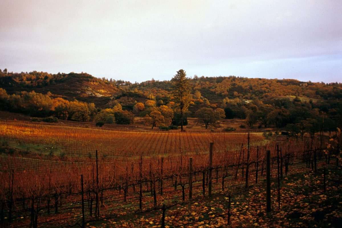 Napa Valley Winery Couple Embraces A Special Tasting Event That Will Bring Their Wines Right To Your Door In Texas photo