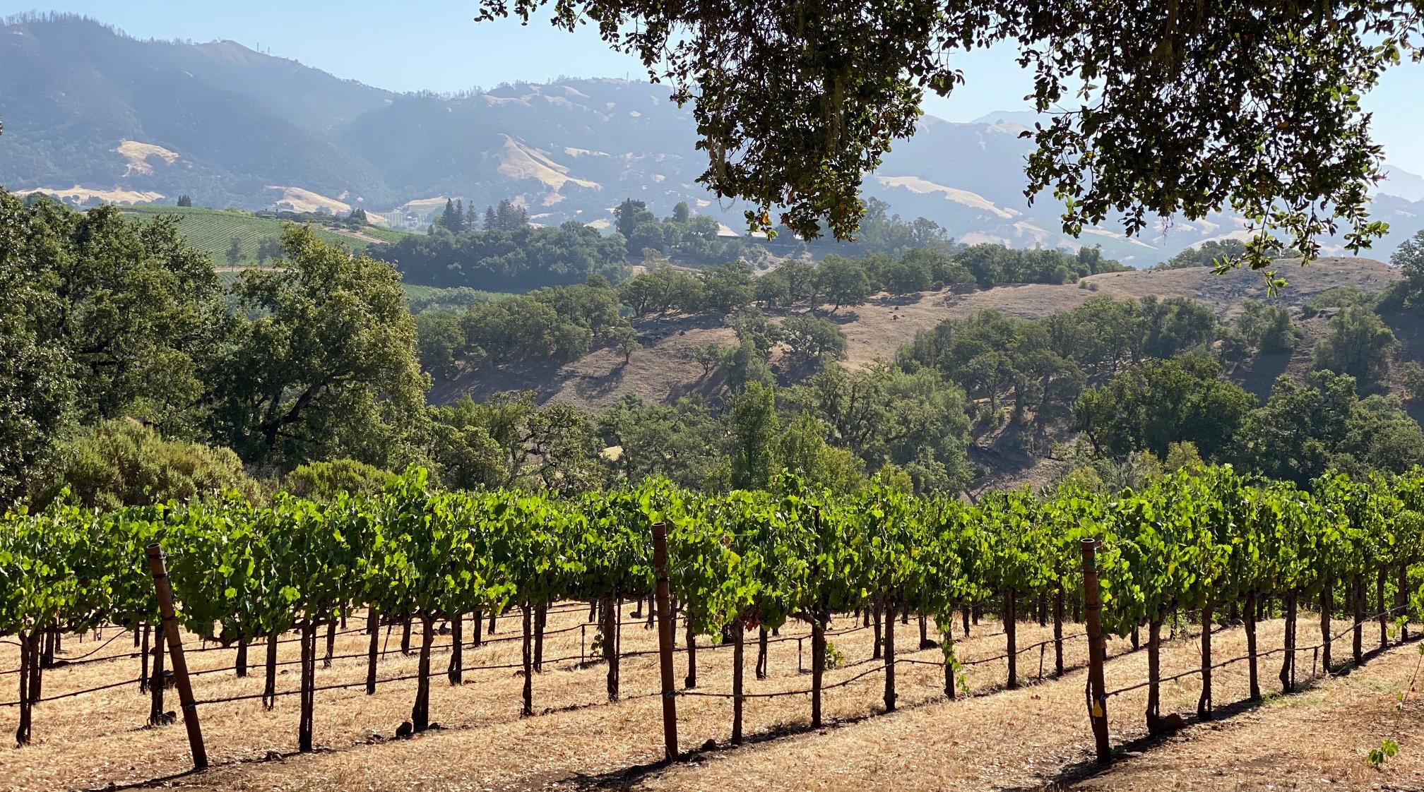 4 Amazing Outdoor Wine Adventures In Sonoma County photo