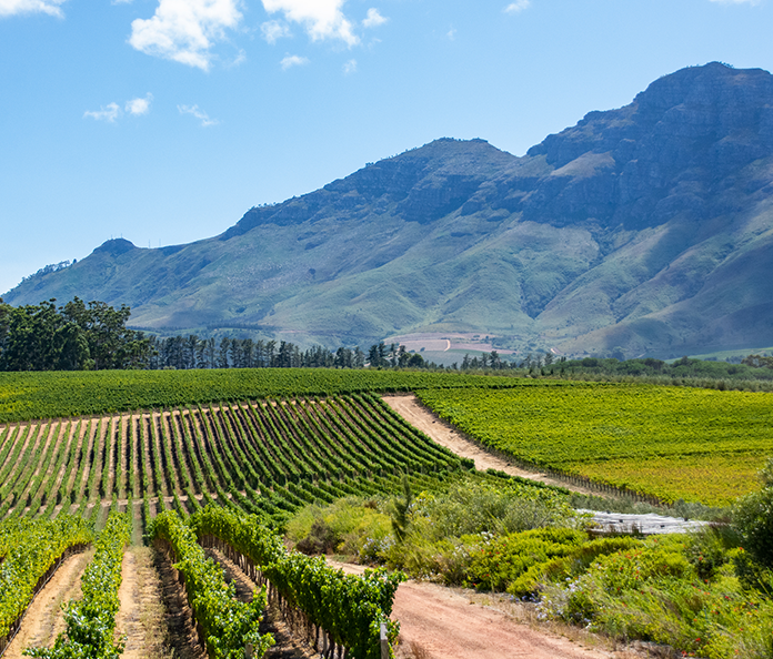 Exclusive Tasting With Glenelly Estate photo
