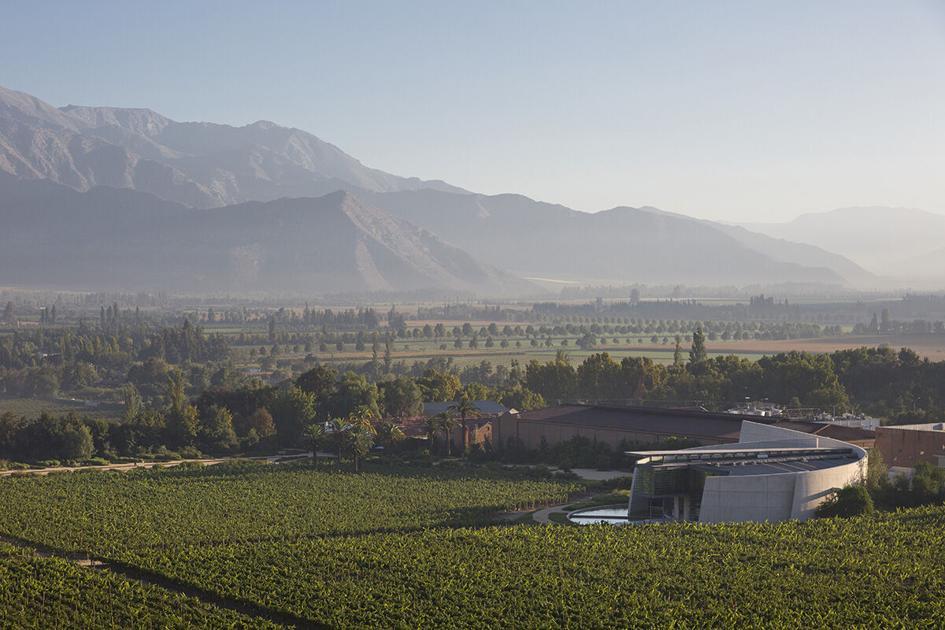 Mandi Robertson: What Makes The Max Wines Of Erraruriz, Chile So Distinct? photo