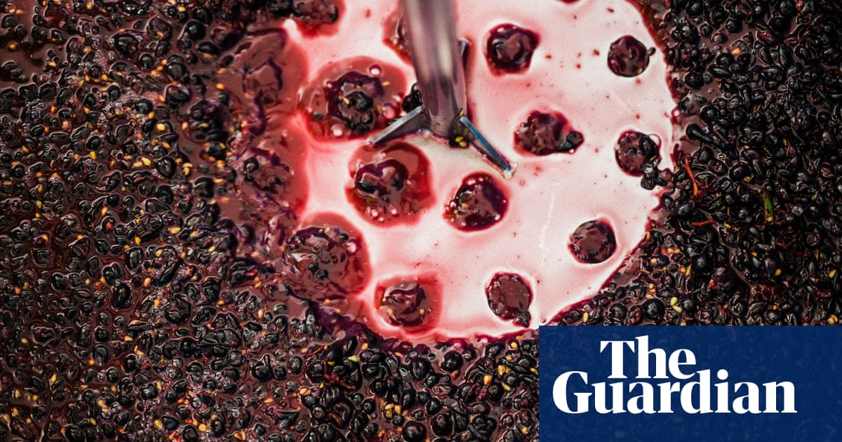 A 'noble' Glass Of Essex Pinot Noir? Winemaker Jubilant At Record-breaking Grape photo