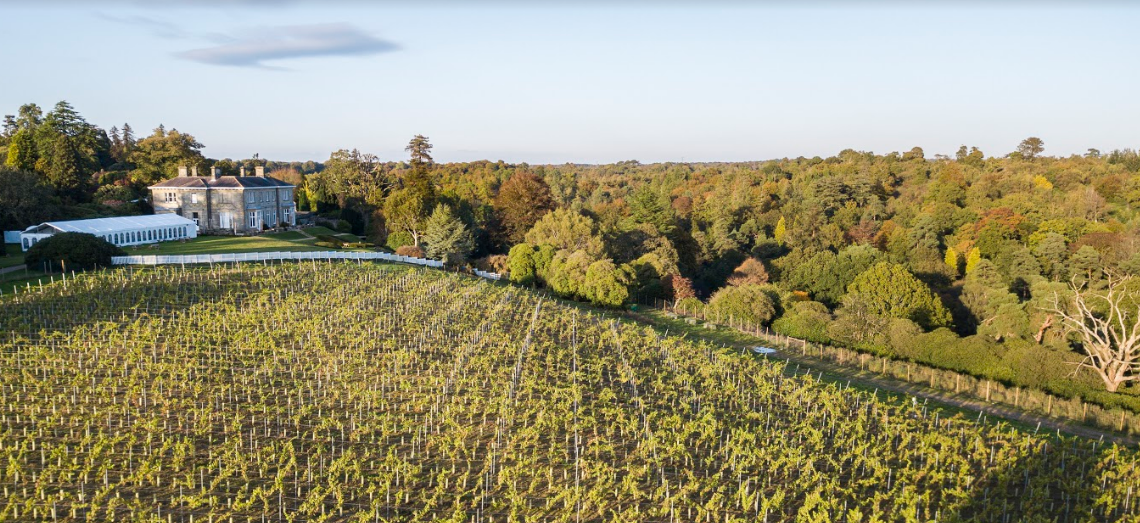 First Harvest for Leonardslee Lakes and Gardens Vineyard in Sussex photo